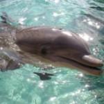 delfini-1