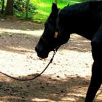 Ένα άλογο συναντά ένα παιδί με σύνδρομο