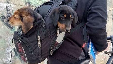 Έβγαλε τα βιβλία και έβαλε στην σχολική τσάντα τα… παρατημένα κουτάβια!