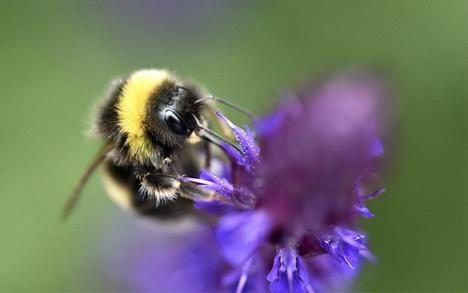 Αν ο ψεκασμός είχε γίνει τη νύχτα, θα είχαν σωθεί περισσότερες μέλισσες, καθώς δραστηριοποιούνται κυρίως κατά τη διάρκεια της ημέρας -EPA/FACUNDO ARRIZABALAGA