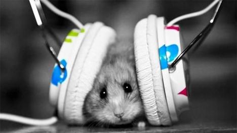 H νέα θεραπεία αποκατέστησε την ακοή σε ποντίκια και αναμένεται να ξεκινήσουν δοκιμές και σε ανθρώπους