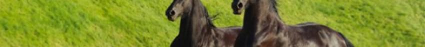 Τα άλογα συχνά πέφτουν θύματα του ιού του Δυτικού Νείλου (ένθετη φωτογραφία)