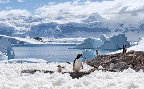 antarktiki-2