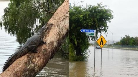 vrohes_krokodili_australia