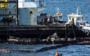 Τον Σεπτέμβριο του 2017, το WWF Ελλάς υπέβαλε στην Εισαγγελία Πλημμελειοδικών Πειραιά που διερευνά τη συγκεκριμένη υπόθεση, μήνυση κατά παντός υπευθύνου για την πρόκληση θαλάσσιας ρύπανσης από πετρελοειδή στον Σαρωνικό Κόλπο. Photo: INTIME NEWS/ΛΙΑΚΟΣ ΓΙΑΝΝΗΣ