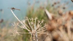 Photo Credits: IUCN/Francesca Ardau