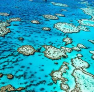 Οι κλιματικές αλλαγές προκαλούν το φαινόμενο της λεύκανσης στον Μεγάλο Κοραλλιογενή Ύφαλο και αν δεν αλλάξει κάτι άμεσα θα υπάρξει ολική καταστροφή σε αυτόν πολύ σύντομα. - SHUTTERSTOCK