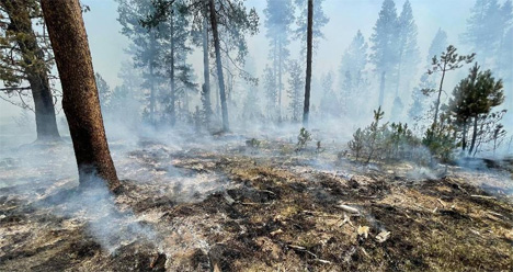 Bootleg Fire Incident Command via AP